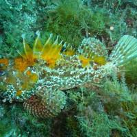 Sortie plongée dans la rade de Toulon