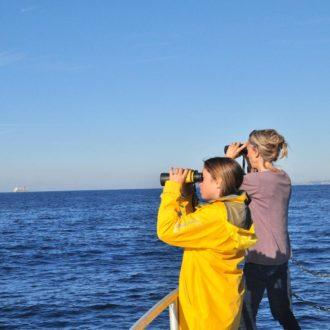 Sortie découverte des cétacés Toulon Tourisme