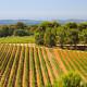 Figuière vignes 3
